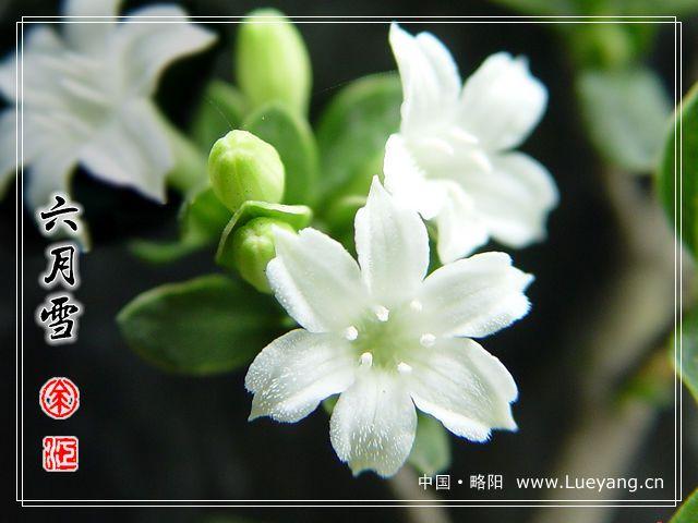 花镜植物配置表图解